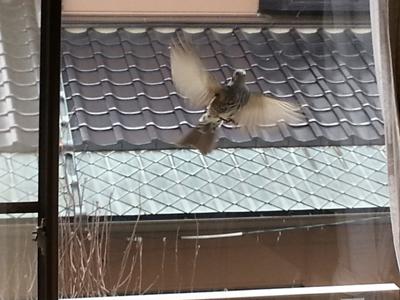 窓キツツキ